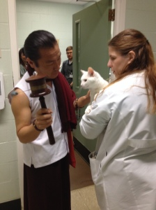 Lama blesses a cat  in Angell Animal Hospital on April 14, 2015
